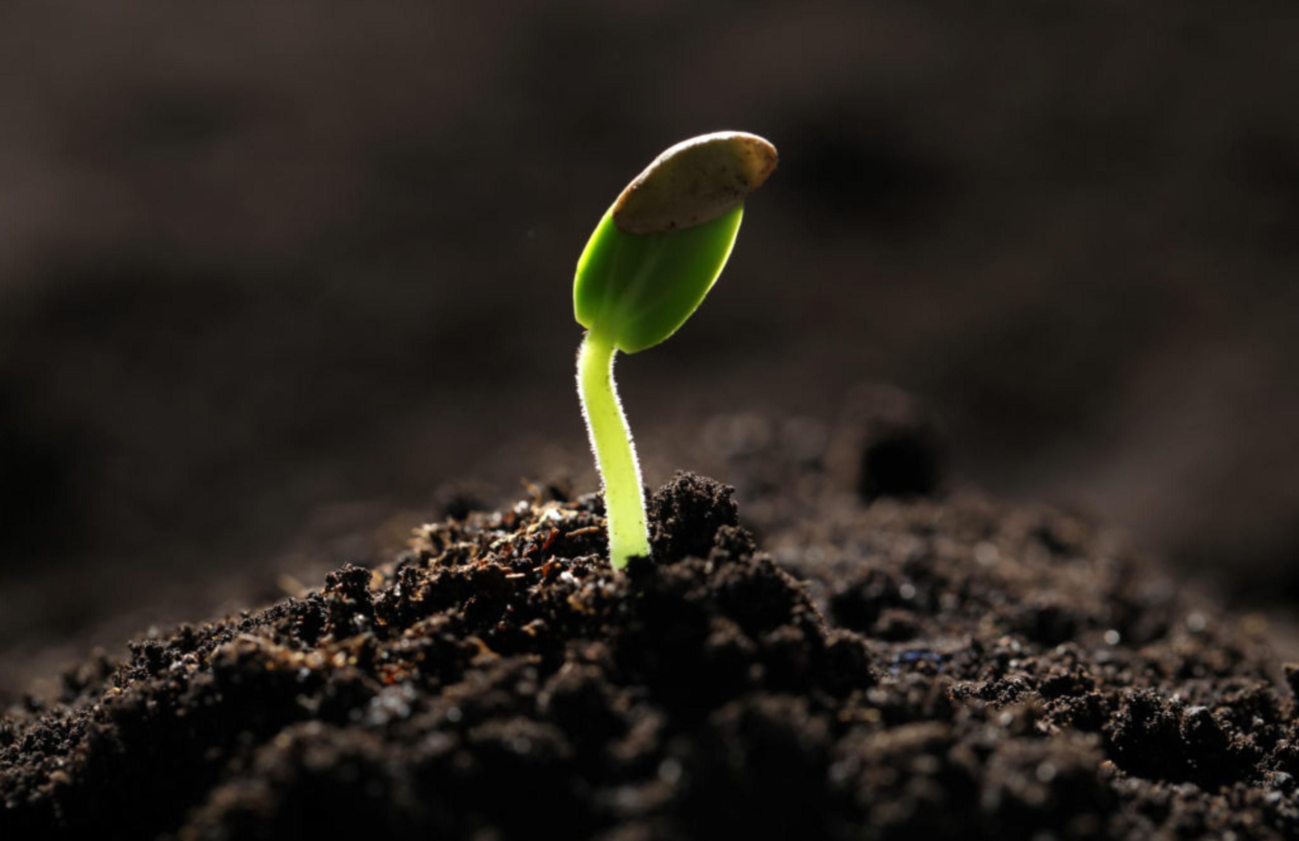 Little green seedling growing in soil, closeup