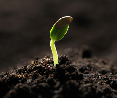 Little green seedling growing in soil, closeup